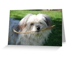 Fetch Belle Greeting Card
