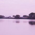 mary river by mickeyb