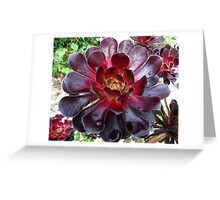 Black Beauty - Aeonium Schwarzkopf Blossoms with Raindrops   Greeting Card