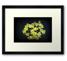 Daffodils Reaching Out Framed Print