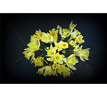 Daffodils Reaching Out Photographic Print