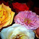 My Roses 16 by Mariam Muradian