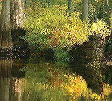 Louisiana Bayou Reflections by KSkinner