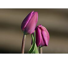 Purple Tulips Photographic Print