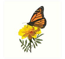 Monarch Butterfly on Marigold Art Print