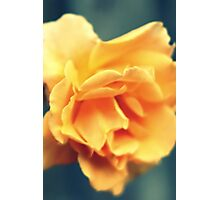 Vintage Peach Rose Photographic Print