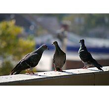 Pigeon Conversation Photographic Print