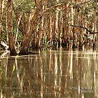 Bongil Bongil National Park, Bundagen. NSW. Australia by Sol Lucas