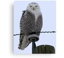 Perched High Above Canvas Print