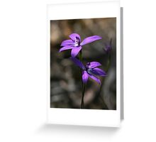 Wax Lip Orchid - Mt Barker Summit Greeting Card