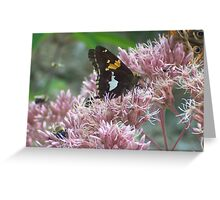 Butterflies and Bee's Greeting Card