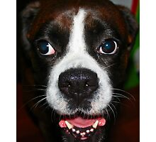 Arwen -Boxer Dogs Series- Photographic Print