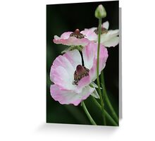 delicate ones Greeting Card
