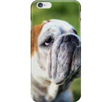 olivia english bulldog taken at central victoria goldfields iPhone Case/Skin