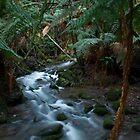 Fern Tree Creek by Leigh O`Mahony