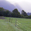 dying day near Leven Canyon, Tasmania by gaylene