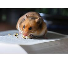 Hungry For Knowledge Photographic Print