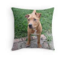 Buster - Too Cute Throw Pillow