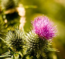 Prickle by Dadian
