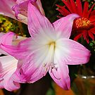 Pink Lily Face by Penny Smith