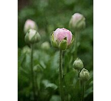 The beauty of buds Photographic Print