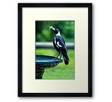 Dinner Time.... Framed Print