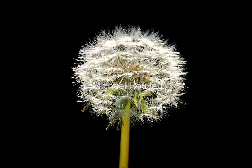 Dandelion by KeepsakesPhotography Michael Rowley