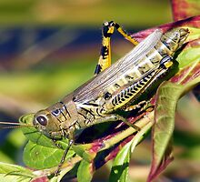 Grasshopper Pose by ronibgood