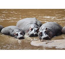 Hippos in The Mara Photographic Print