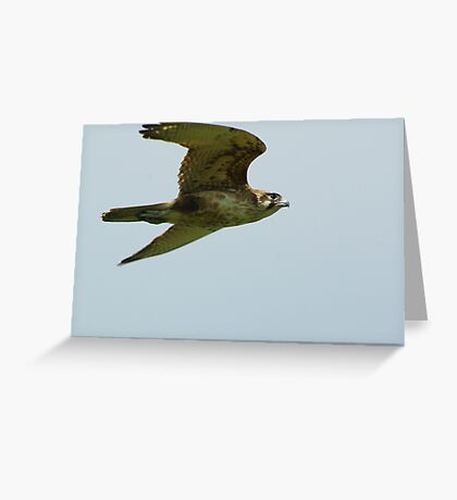 Brown Falcon from the Silver Falcon 4 Greeting Card