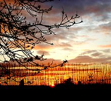 Sunset In Cambridge  by RosaMarieAshby
