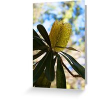 Australian Bottle Brush Greeting Card