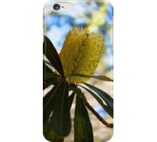 Australian Bottle Brush iPhone Case/Skin