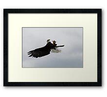 Eagle catching prey Framed Print