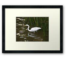 Egret Wonder Framed Print