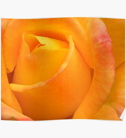 Heart of a rose 11b, blushing, kissed by dew Poster