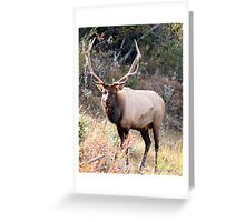 Elk Greeting Card