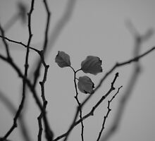 last leaves by Florian Verhein