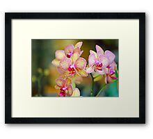 Veined Orchid Framed Print