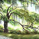 Live Oak by LinFrye