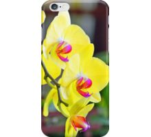 Yellow Orchid blooms iPhone Case/Skin