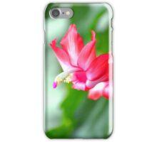 Christmas Cactus flower bloom iPhone Case/Skin