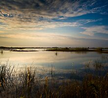 Morning Sawgrass by Denis Wagovich