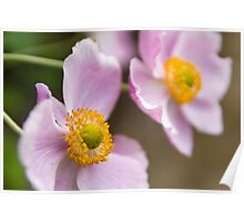 Pink and Yellow Flower Poster