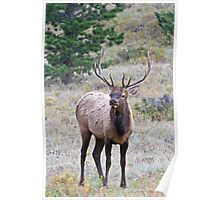 Lone Buck Poster
