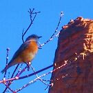 Zion Canyon Bluebird by jsmusic