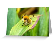Covered in Pollen Greeting Card