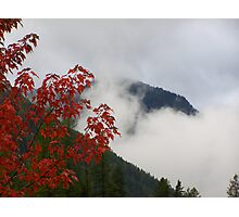 Red Leaves and Mist Photographic Print