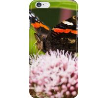 Red Admiral on Plant iPhone Case/Skin