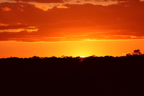Orange Glow by Laura Puglia
